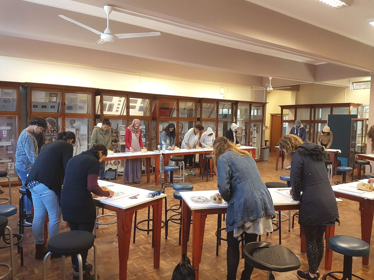 Observation studies of the base of the skull by UCT MBChB students during a 12 day HVO&D workshop.
